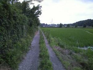 田んぼ道とマンション